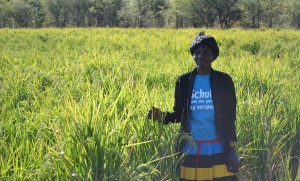 Esnart Siandavu stands proudly in her rice field after changing from traditional farming methods to what is now a new and productive way of farming for her.